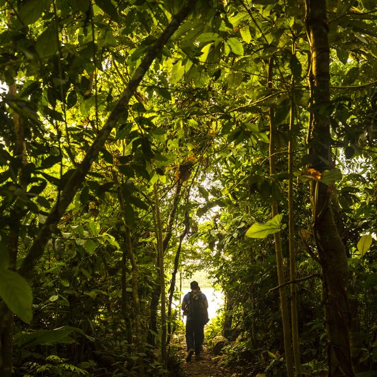 Tambopata Research Center Forest