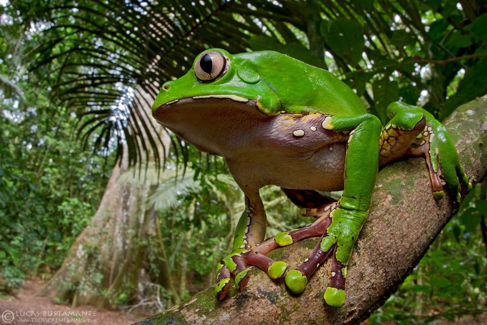 Fauna - Amphibians & Reptiles