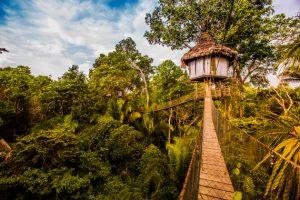 Treehouse Landscape