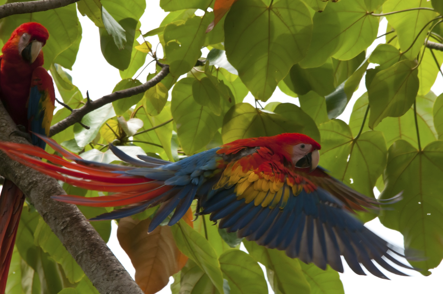 Birdwatching, Iquitos