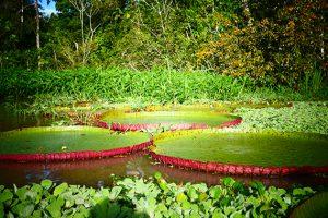 Nature, Iquitos