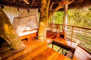 Room at Treehouse