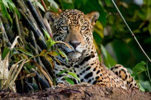 Wildlife Tours