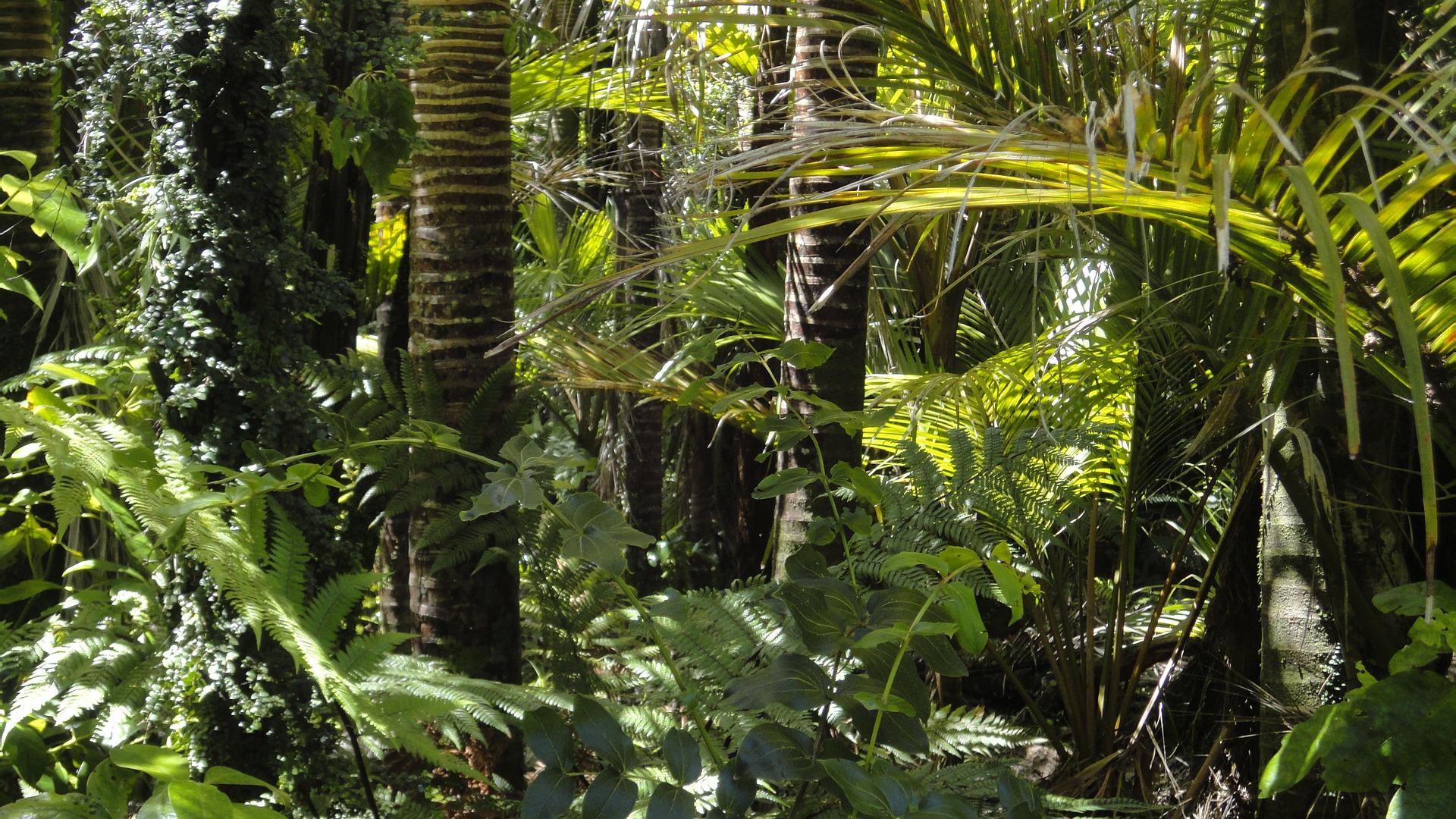plants in peru